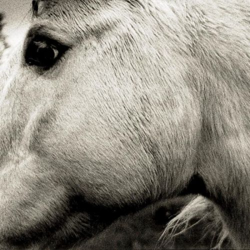 Bonny Light Horseman – Bonny Light Horseman